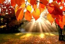 Photo of Outono, berço das Estações