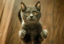 Photo of O gato