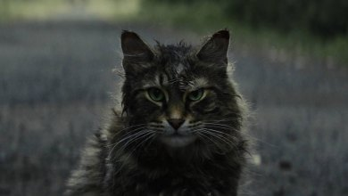 "Photo of ""Pet Sematary"""
