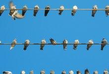 Photo of O que é que nos distingue dos outros?