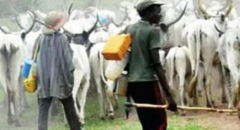Fulani Cattle Breeders are no longer safe in SouthEast – Miyetti Allah Laments