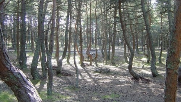 Padurea Horia-Baciu