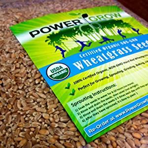 best grass seeds