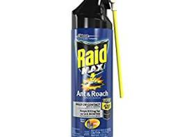 best ants sprays