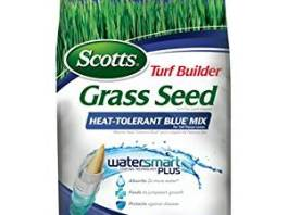 best grass seeds