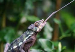Feeder Insect Nutrition Facts - Chameleon (ReptiFiles)