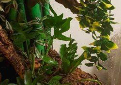 crested gecko terrarium ideas - Izzy Brenner