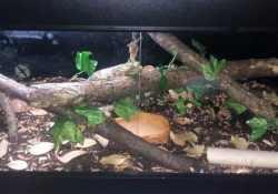 Ball python terrarium ideas - Nicole Inglis