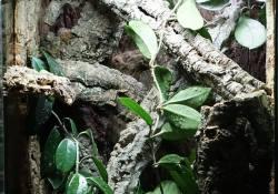 gargoyle gecko terrarium ideas - artful auriculatus