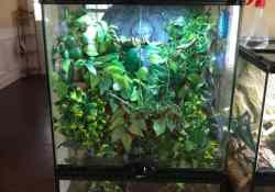 crested gecko terrarium ideas - ashley mcclure