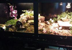 Blue tongue skink terrarium ideas - Carrie Ott