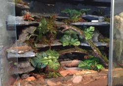 gargoyle gecko terrarium ideas - jake vanhuis