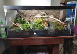 corn snake terrarium ideas - jazmin sutherland