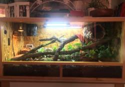 Ball python terrarium ideas - Jemma Read2
