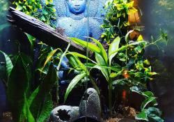 crested gecko terrarium ideas - jonathan secrist