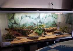 corn snake terrarium ideas - karolina praninskaite