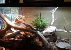 corn snake terrarium ideas - katie wilkins