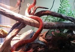 corn snake terrarium ideas - katie wilkins2