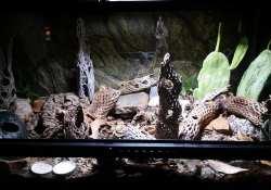 leopard gecko terrarium ideas - katie wilkins2