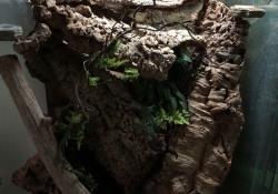 gargoyle gecko terrarium ideas - melissa baer