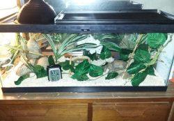 corn snake terrarium ideas - michelle barkdoll