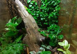 mourning gecko terrarium ideas - nathan barretto