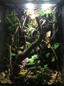 leaf-tailed gecko terrarium ideas - leaf-tailed gecko terrarium ideas - ray perry