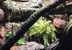 Ball python terrarium ideas - Robyn Harrigan