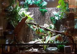 gargoyle gecko terrarium ideas - stephanie buck