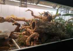 Ball python terrarium ideas - Zack Tippie2