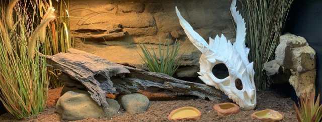 sudan plated lizard habitat enclosure