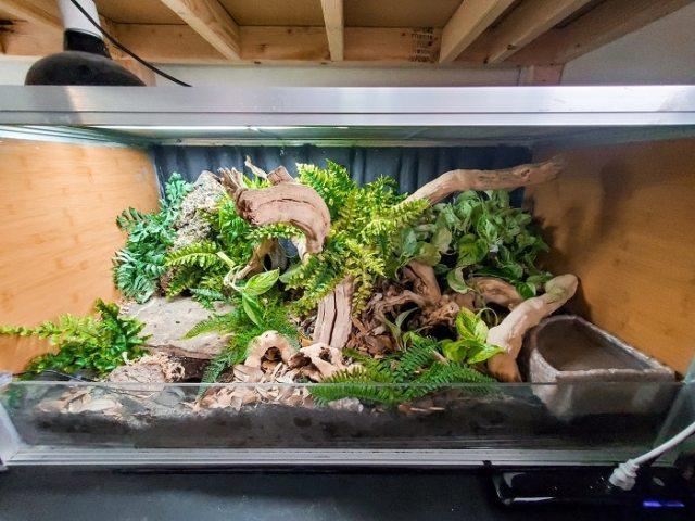 ball python reptile terrarium