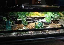 Dan Lee leopard gecko terrarium