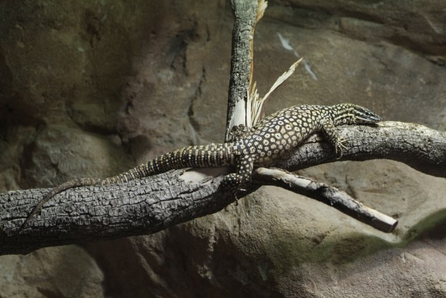 ackie monitor on branch