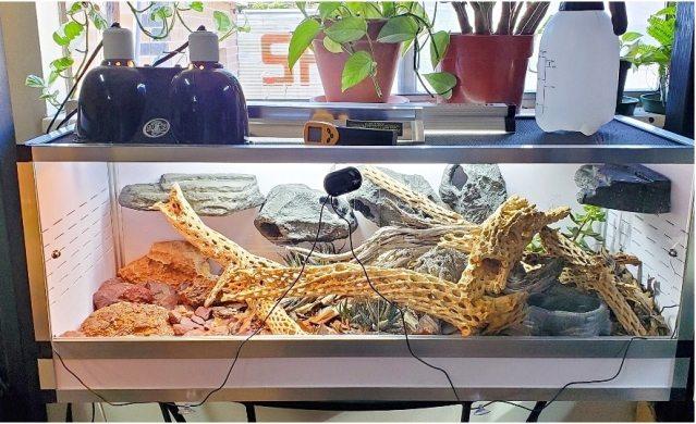 ocellated skink terrarium
