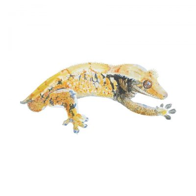 crested gecko commission2