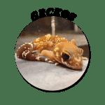 Geckos-Circle