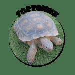 Tortoise-Circle