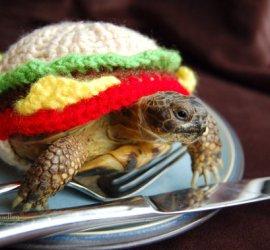 Tortoise Cozies by MossyTortoise on Etsy