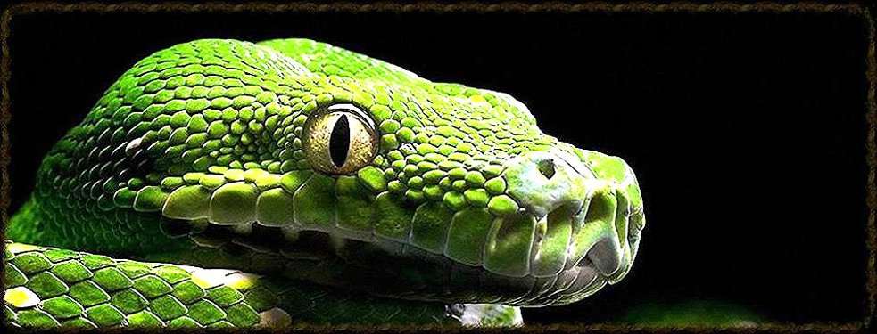 Reptile Hut Exotic Pet Store