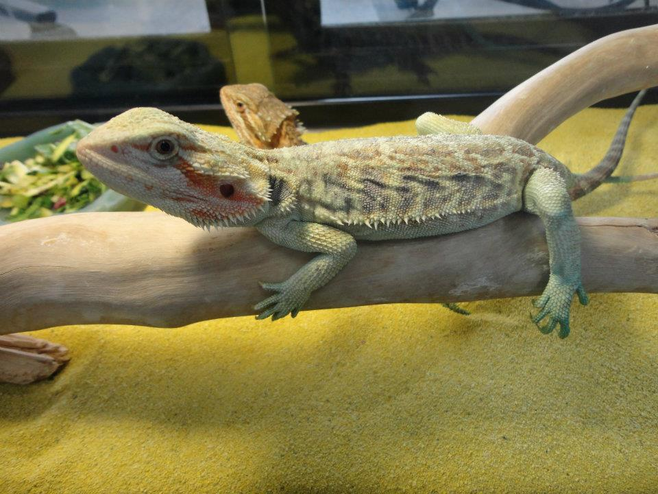 Leesburg Pet Center