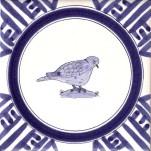 7 collared dove