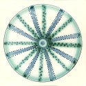 Diatom 15