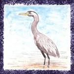 Seabird 14
