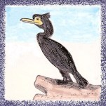 Seabird 19