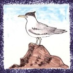 Seabird 2