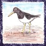 Seabird 5