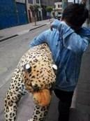 ¿Y ahora qué hago con este enorme tigre?