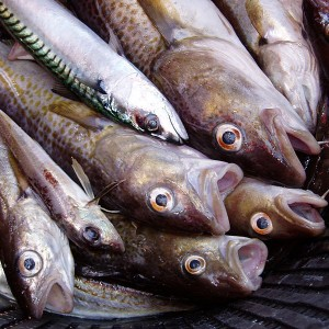 Mass-Fish-Deaths