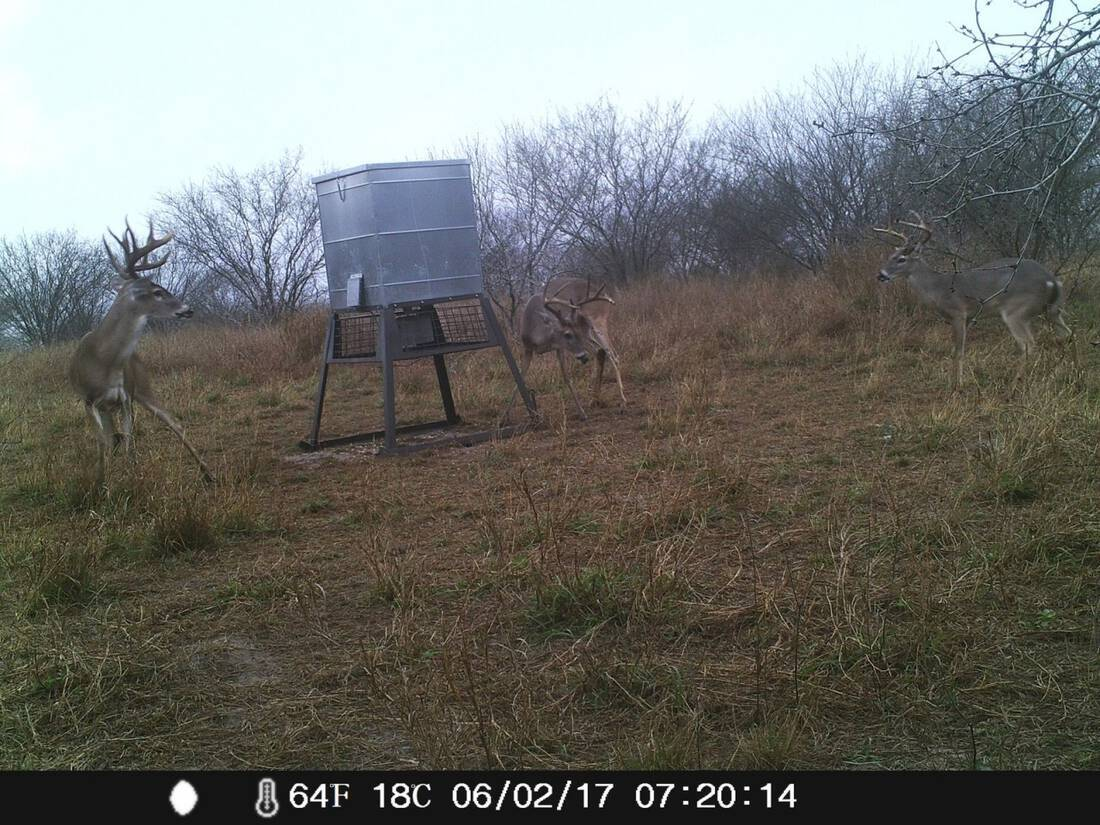 South Texas Land Hunting